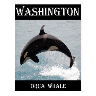 Carte Postale Baleine d'orque de Washington