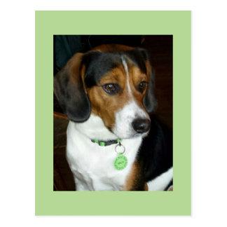Carte Postale Beagle doux appelé Spot