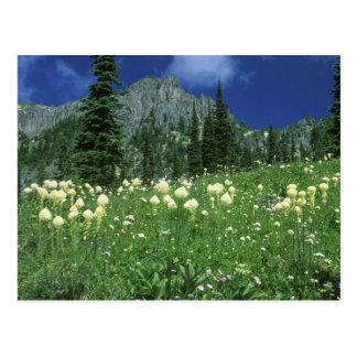 Carte Postale Beargrass au lac Eunice, le mont Rainier NP, WA,