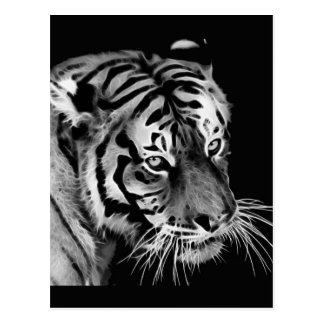 Carte Postale Beau blanc Afrique de noir de tigre