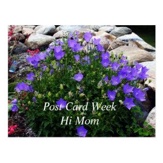 Carte Postale Beau Cantorbéry Bells Fowers - jardin de roche