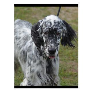 Carte Postale Beau chien de poseur anglais