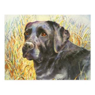 Carte Postale Beau Labrador noir