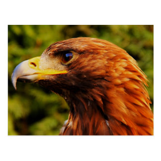 Carte Postale Beau portrait brun d'aigle