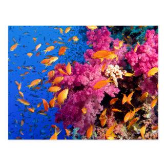 Carte Postale Beau récif coralien Naturescape