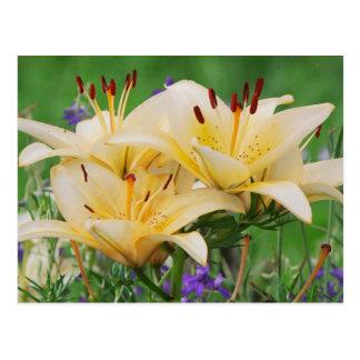 Carte Postale Beige lilly