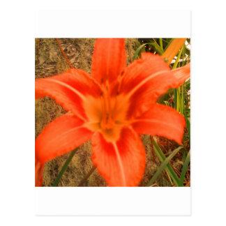Carte Postale belle fleur tropicale