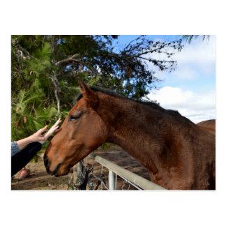 Carte Postale Bennie le cheval aimant Pat