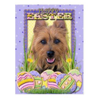 Carte Postale Biscuits d'oeuf de pâques - Terrier australien