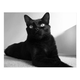 Carte Postale black cat
