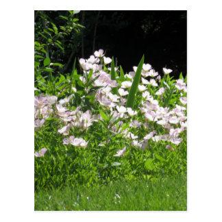 Carte Postale blanc sauvage de fleur de ressort de la colline NJ