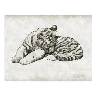 carte postale blanche de chat de tigre de sommeil