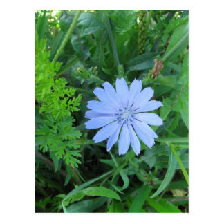 Carte postale bleue de fleur sauvage