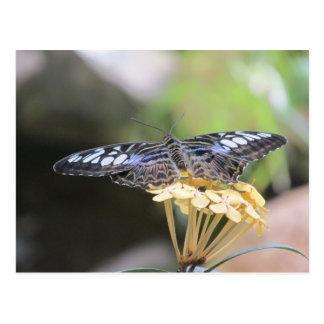 Carte postale bleue de papillon de tondeuse