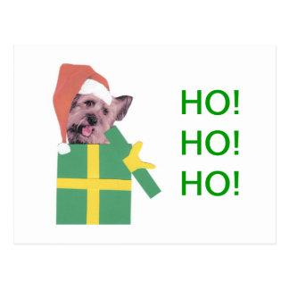 Carte Postale Boîte verte de Skye Terrier