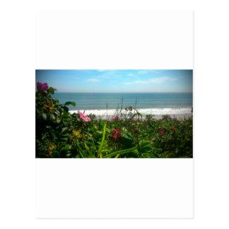Carte Postale Bon à rien de plage de prune de plage