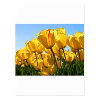 Carte Postale bong la lèvre du TU de hoa