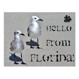 Carte Postale Bonjour de la Floride ! Mouette de Miami