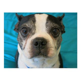 Carte Postale Boston Terrier se reposant sur un lit