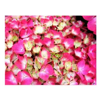 Carte Postale Bouquet rose d'hortensia