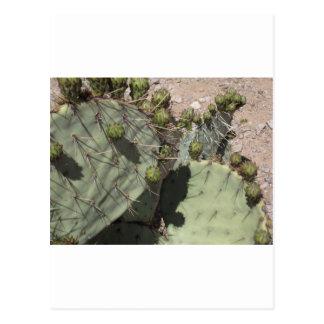 Carte Postale Bourgeons de figue de Barbarie