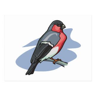 Carte Postale Bouvreuil d'oiseau