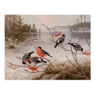 Carte Postale Bouvreuils dans le paysage CC0821 Von Wright