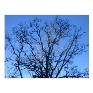 Carte Postale Branches ensoleillées