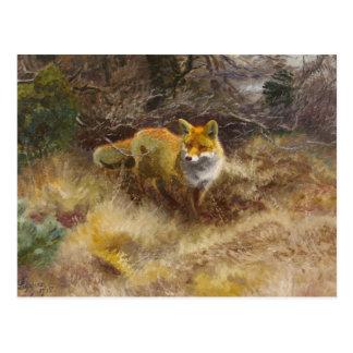 Carte Postale Bruno Liljefors - Fox et paysage