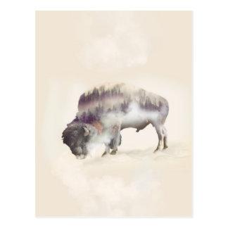 Carte Postale Buffle-double buffle-paysage exposition-américain