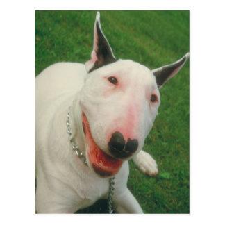 Carte Postale Bull-terrier