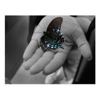 Carte Postale Buttefly à disposition