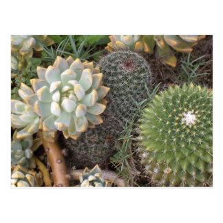 Carte Postale cactus