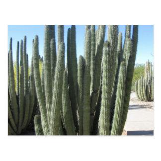 Carte Postale Cactus de tuyau d'organe