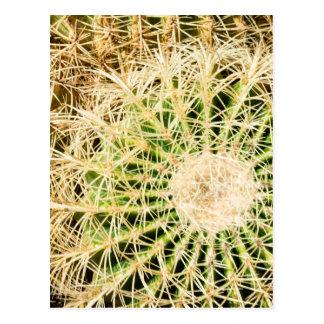 Carte Postale Cactus en épi vert