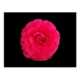 Carte Postale Camélia rose lumineux
