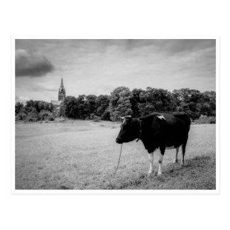 Carte Postale Campagne vintage avec le noir/blanc de vache