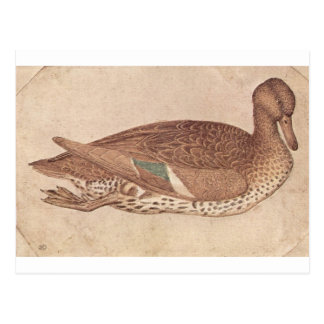 Carte Postale Canard par Pisanello