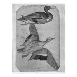 Carte Postale Canards, le de l'album de Vallardi