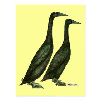 Carte Postale Canards noirs de coureur