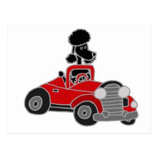 Carte Postale Caniche noir conduisant la voiture convertible