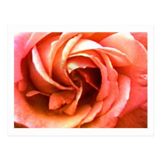 Carte Postale Cantorbéry rose 3 les cadeaux de Zazzle de MUSÉE