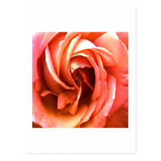 Carte Postale Cantorbéry rose les cadeaux de Zazzle de MUSÉE