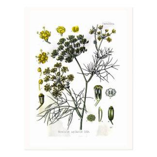 Carte Postale Capillaceum de Foeniculum (fenouil)