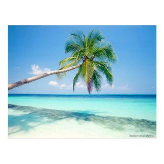 carte postale caribean de plage