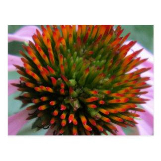 Carte Postale Centre de fleur de cône