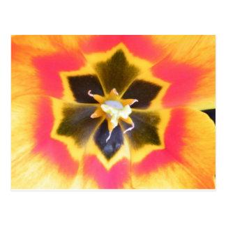 Carte Postale Centre de tulipe