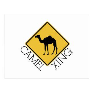 Carte Postale Chameau Xing