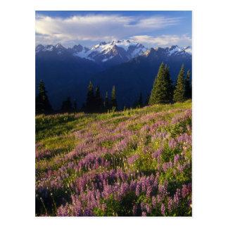Carte Postale Champ de loup, du mont Olympe, et des nuages à