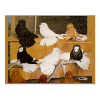Carte Postale Champions de pigeon de trompettiste